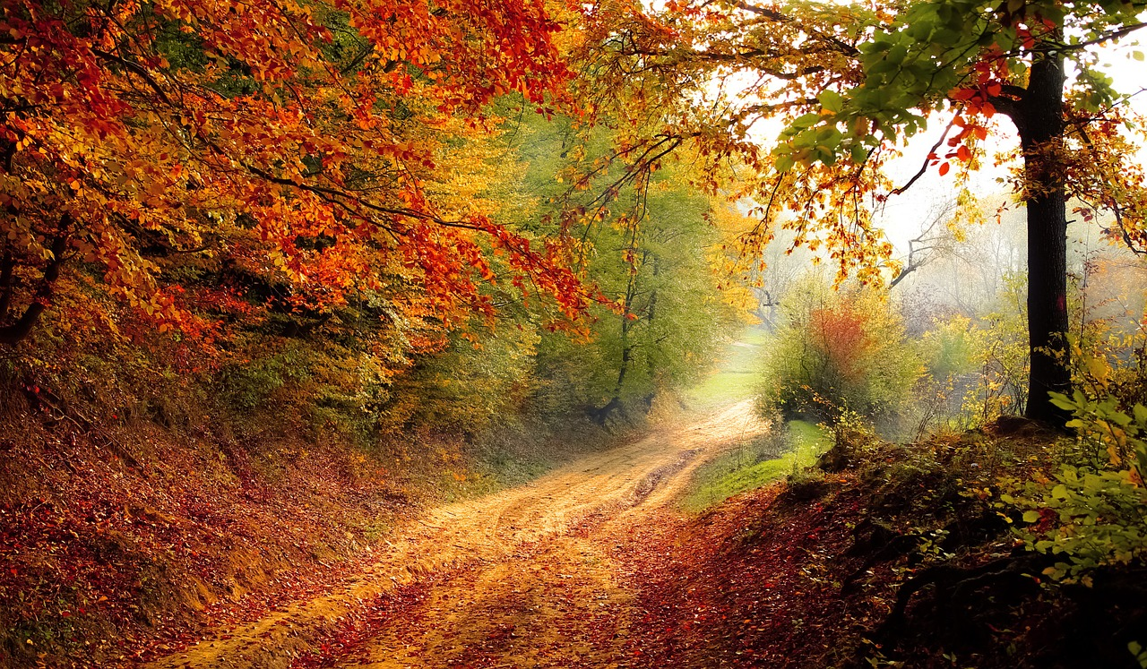 a beautiful trail with autumn leaves